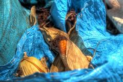hidden treasure (K C CHAN) Tags: blue bag thailand gold golden corn