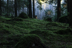 in the forest (kipuna) Tags: forest suomi finland woods mets sammal