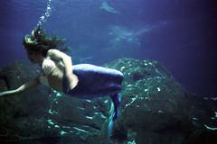 519_111014_88 (Mark Dalzell) Tags: camera 35mm aquarium kodak camden rangefinder vision ricoh 519 c41 fiveonenine 500t