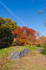 Autumn Curves (SamuelWalters74) Tags: newyorkcity autumn trees newyork unitedstates centralpark manhattan fallcolors places autumnleaves autumncolors fallfoliage centralparkinautumn