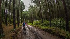 Bosque de Daza / Pasto / Nariño / Colombia