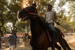 Horses on Parade - Sonepur, India. (Christian Clowes) Tags: india in bihar hajipur asia nikon d500 street streetphotography christianclowes horse jockey gallop equine action stride rider sonepur sonepurmela