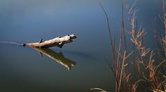 Wyndham-Carseland Provincial Park (jacques.raymond10) Tags: wyndhamcarselandprovincialpark wyndham carseland bowriver alberta canada