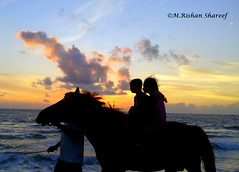 A horse in the sky too?! (M.RISHAN SHAREEF) Tags: animal animals nature native water blue black beach culture colombo cloud ocean vechicle evening yellow enjoy sea people family festival horse thenature winter sky kid lighting light morning man orange work peoples srilanka sun women