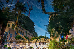 upside down mix up (mariola aga ~ OFF vacation) Tags: vegas lasvegas hotel buildings trees palmtrees water bottom upsidedown mixup reflection abstract