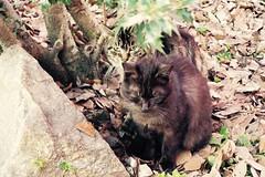 Today's Cat@2017-03-17 (masatsu) Tags: cat thebiggestgroupwithonlycats catspotting pentax mx1