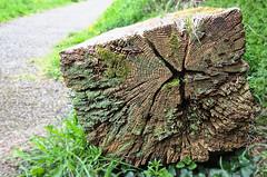 Photo of lumber