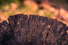 Stump on the Trail, Rich (fingerprints1148) Tags: tree stump nature path forest cut burned scorched trail wood