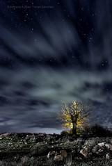 Noche mágica /  Magic night (Antonio López-Torres Sánchez) Tags: libisosanorum fotografía night árbol tree luzmágica magicallight noche estrellas stars nubes clouds horna chinchillademontearagón castillalamancha lamancha albacete españa fotografianocturna nightphotography