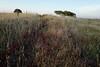 Santa Bárbara de Padrões L1000176 (x-lucena) Tags: santabárbaradepadrões azinheira quercusilex alentejo fence