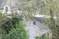 Ψίνθος (Psinthos.Net) Tags: ψίνθοσ psinthos march spring μάρτησ μάρτιοσ άνοιξη φύση nature springstorm ανοιξιάτικηκαταιγίδα καταιγίδα μπόρα storm road δρόμοσ wetroad βρεγμένοσδρόμοσ chapel εκκλησάκι άγιοσνικόλασ άγιοσνικόλαοσ saintnicolas cross σταυρόσ γεφύρι άνθη blossoms μπουμπούκια buds rosebuds τριανταφυλλιά τριαντάφυλλα roses rosebush pinkroses ρόζτριαντάφυλλα πεζοδρόμιο sidewalk pavement πλακόστρωτο βρύση βρύσηψίνθου βρύσηψίνθοσ περιοχήβρύση vrisi vrisiarea vrisipsinthos planetree πλάτανοσ δέντρο tree ευκάλυπτοσ eucalypt χόρτα greens πετρόχτιστοστοίχοσ stonewall πετρόχτιστο βροχερήμέρα rainingday valley psinthosvalley κοιλάδα κοιλάδαψίνθου κοιλάδαψίνθοσ