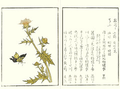 Thistle (Japanese Flower and Bird Art) Tags: flower thistle cirsium asteraceae ryusui katsuma ukiyo woodblock picture book japan japanese art readercollection