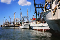 IMG_1865 (Blue Turtle Trawler) Tags: fortmyersbeach shrimpboats sh