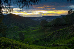 sunrise from tea plantation. (Dingo photography) Tags: d5100 dx 1855mm kitlens tea plantation landscape vista colourful asia morning cameronhighlands malaysia malaysianphotographers dingophotography nikon mountains brinchang goldenhour sunrise clouds sky