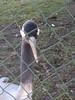 IMG_20170326_124839 (paddy75) Tags: duitsland reken wildparkfrankenhof