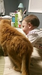Update for 23 year old Timmy! (Hospice Hearts) Tags: hospicehearts nonprofit animalrescue wwwhospiceheartsorg champaign urbana illinois il cat cats foster feline felines foreverhome dogs dog donate volunteer adopt adopted adoptdontshop 501c3475247265