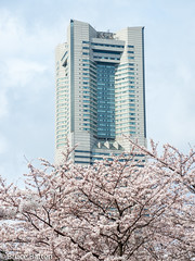 170406 Yokohama-02.jpg (Bruce Batten) Tags: trees locations kanagawa flowers plants subjects honshu buildings urbanscenery rosaceae japan yokohama yokohamashi kanagawaken jp