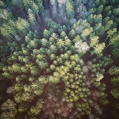 Forrest, Switzerland 🌳🌲🚁 • • • • • • • (akarakoc) Tags: instagramapp square squareformat iphoneography uploaded:by=instagram perpetua