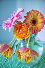 IMG_7402 (bess_bg) Tags: flowers blossom fairy orange garden spring tulip gerber cut relax stilllife stillife indoor bouquet