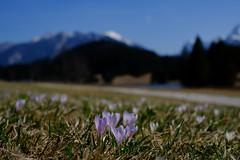 Am Geroldsee (Oberau-Online) Tags: gerold geroldsee