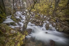 Gushing Down (handmiles) Tags: colour glennevis scotland waterfall movement longexposure ndfilter water mountains outdoor outside out hdr sony sonya77mark2 sonya77m2 tamron tamron1024mm wideangle mileshandphotography2017