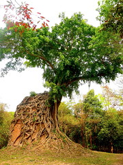 Temple with a Rooting Interest (Eye of Brice Retailleau) Tags: angle colourful colours composition earth landscape outdoor paysage perspective scenery scenic travel trees view vista extérieur roots tree temple heritage ruin ruins asia cambodia cambodge siemreap angkor