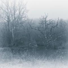 Dreamy (kmac1960) Tags: fog shawneemissionpark photoshop nik photography landscape textured blackandwhite trees misty kansas