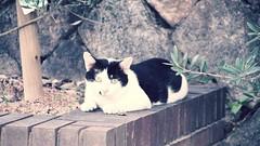 cat in kobe. (tendele.) Tags: street travel urban cats animals japan asia streetphotography kobe