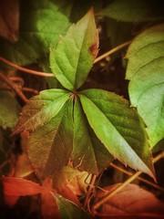 Herbstlaub (mheckerle) Tags: autumn nature herbst natur taunus 2014