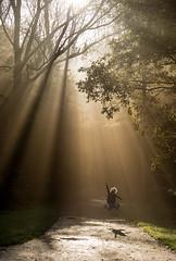 Jump! (genf) Tags: light boy sunlight amsterdam forest licht jump sony rays bos zon beams buiten zonlicht a77 amsterdamse jongen sprong springen tmt zonnestralen