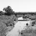 Missouri-Pacific Railway Trestle over Salt Bayou 1410251301bw