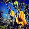 #israeltours #galilee #fruit #carambola #holyland