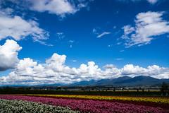 Furano landscape