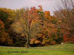 Autumn Colors and Bare Branches in the Hudson Valley (moelynphotos) Tags: autumn ny fallcolors newyorkstate westchester hudsonvalley moelynphotos