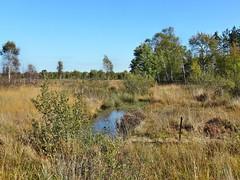 Herbst in der Drover Heide (mama knipst!) Tags: autumn herbst natur droverheide