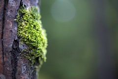 Moss (Zdenko Zivkovic) Tags: macro tree green forest moss nikon bark 60mm d800