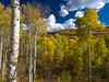 Elk Mountain Aspenfire (RobertCross1 (off and on)) Tags: autumn trees color fall nature leaves clouds forest landscape colorado bluesky olympus aspens rockymountains omd quakingaspen populus populustremuloides em5 elkmountains rockpaperexcellence 1250mmf3563mzuiko