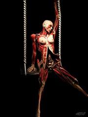 People body (Harmen de Boer) Tags: people woman amsterdam death muscle science health medicine inside vrouw iphone bodys geneeskunde healty habo photografic spieren bodysworld insidee