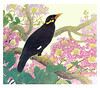 Crape myrtle and common hill myna (Japanese Flower and Bird Art) Tags: flower bird art japan japanese book hill picture myrtle common nihonga crape lithograph religiosa myna indica lythraceae lagerstroemia sturnidae gracula shunko readercollection tsuchioka