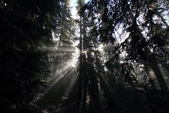 Sun Beams (Shutterbug Fotos) Tags: autumn light sun sunlight color colour fall nature beautiful beauty sunshine shine scenic rays washingtonstate beams sunbeams northcascades mountainloophighway highway20 filteredsunlight filteredsunshine