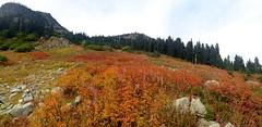 IMG_0195 (cpliler) Tags: hiking maplepassloop