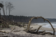 after the storm (ju.koehler) Tags: meer ostsee darss fischland