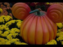 Disneyland Paris 2014 (www.dpjphotography.co.uk) Tags: paris france andy buzzlightyear disneyland woody disney mickeymouse minniemouse donalduck