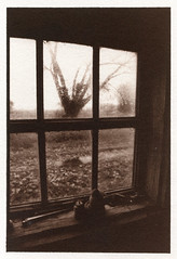(Edgars Kaplers) Tags: analogphotography vandyke alternativephotography digitalnegative altprocess edgarskaplers