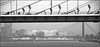 Erasmusbrug & Willemsbrug (steeedm) Tags: bridge netherlands bicycle rotterdam cyclist maas willemsbrug erasmusbrug