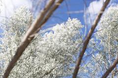 _MG_8440 (sir_mac_alot66) Tags: sky tree beautiful leaves amazing cool fotografie infrared framing fotografia fotografa   fotograph fotoraflk  lifelooksbetterthroughaviewfinder