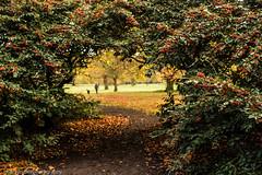 Calderstones Park (juliereynoldsphotography) Tags: park autumn england leaves liverpool landscape 50mm holly calderstonepark juliereynolds juliereynoldsphotography
