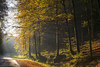 Evening mood at Engenthal (Bernhard_Thum) Tags: autumn fall nature landscape bayern bavaria evening herbst natur natura franken landschaft autunno legacy bernhard tistheseason carlzeiss zm thum leicam engenthal elitephotography landscapesdreams alemdagqualityonlyclub capturenature daarklands planart250 pinnaclephotography bernhardthum
