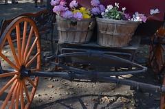Bloom-mobile (MPnormaleye) Tags: wood flowers orange plants floral beautiful wheel wagon wooden basket rustic textures utata blooms cart axle