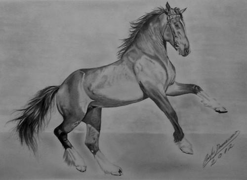desenho realista cavalo a photo on flickriver